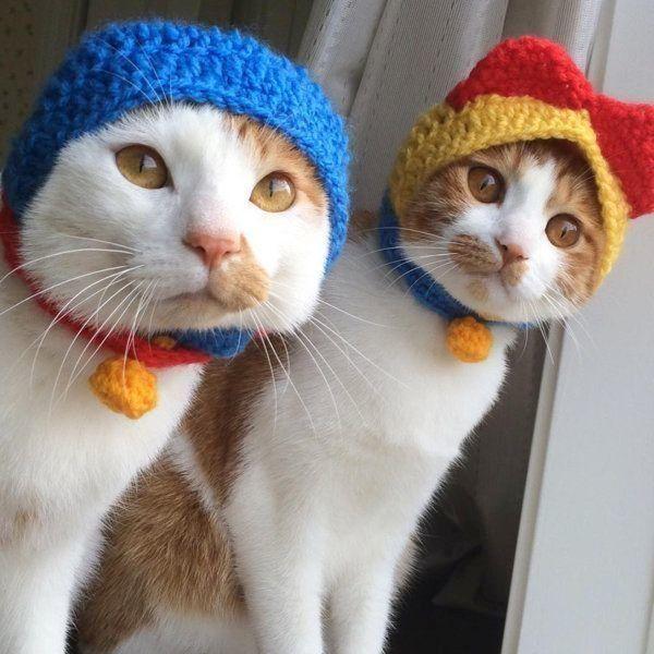 猫のいちごちゃんとタルトちゃん