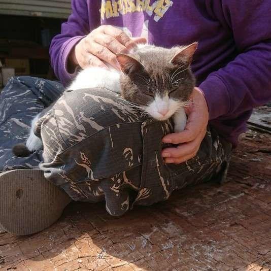 抱っこされる日本ネコ