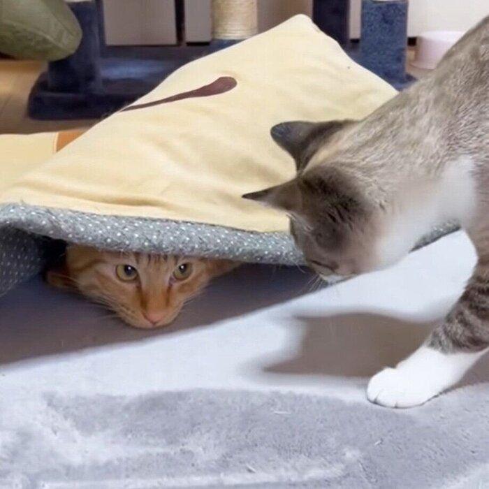 潜っているリクちゃんと、やってきたリノちゃん
