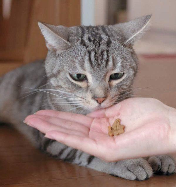 猫の嗜好品のおやつとは