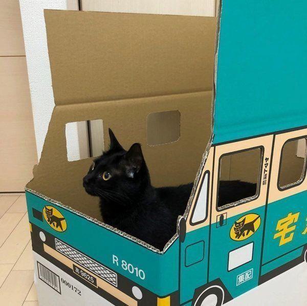 トラックの中に入る黒猫