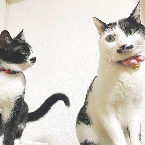 おヒゲがチャームポイントの元保護猫・ランちゃんとレイちゃん