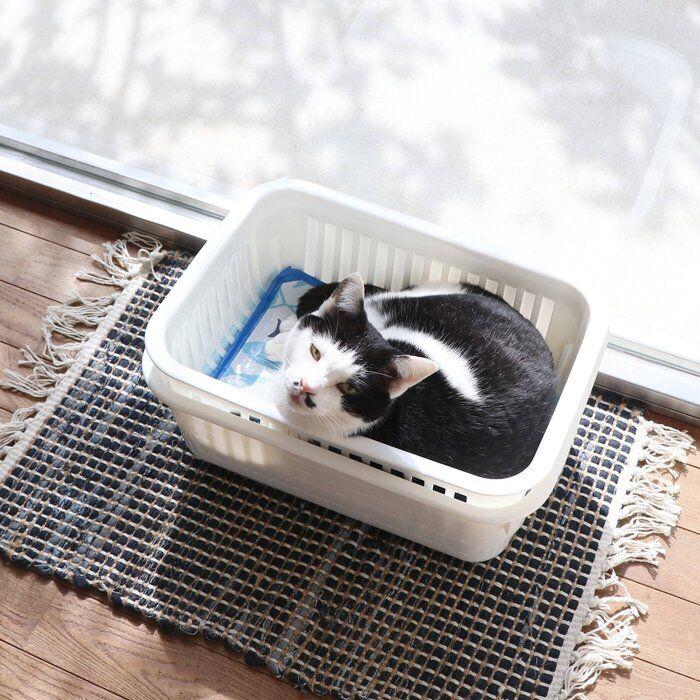 制作時間10分! ひんやり猫ベッドで猫の暑さ対策