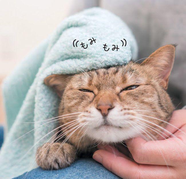 顔をタオルで拭いてもらっている猫