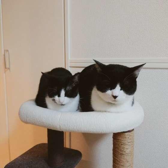香箱座りする2匹の猫