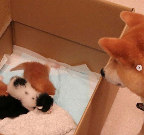 突然出会った4匹の子猫