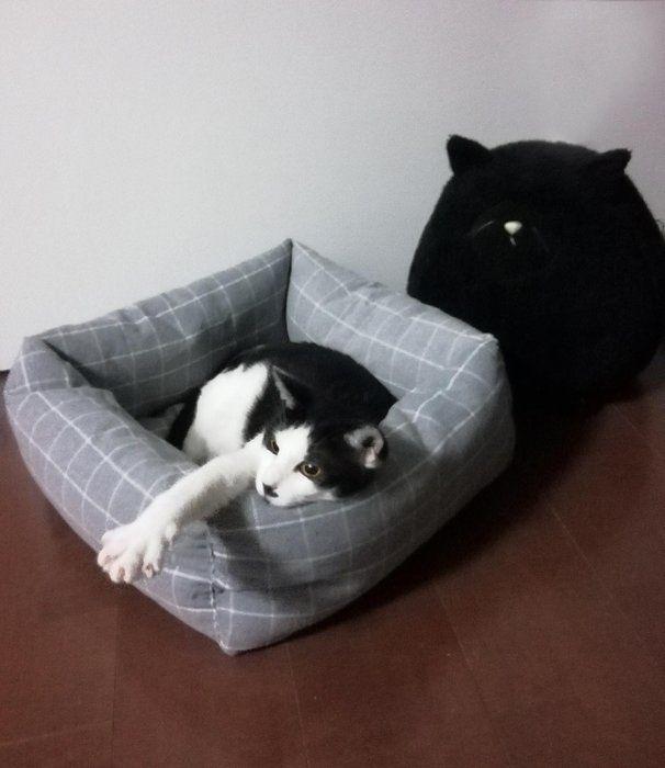 自作猫ベッドでくつろぐ猫