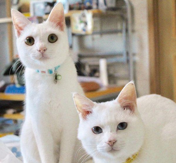 かわいいお顔で写る白猫