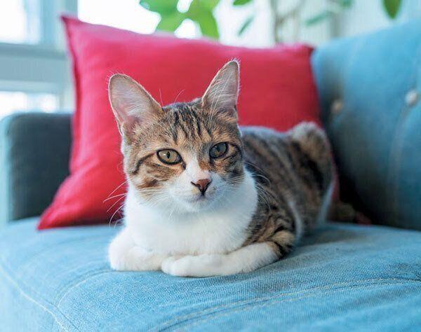 ソファに座る猫