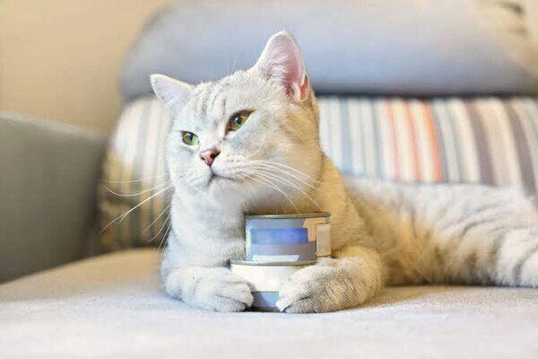 缶詰をかかえる猫
