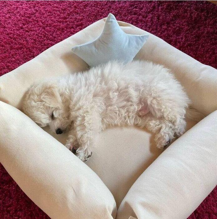 手作りの犬用ベッド