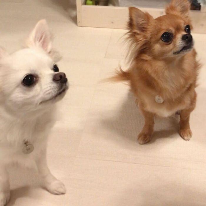 何かを真剣に見つめる犬たち