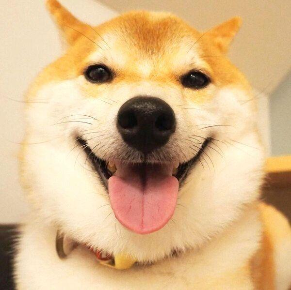 笑顔のこてつくん