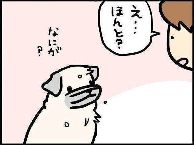 【連載】パグ犬めー vol.92