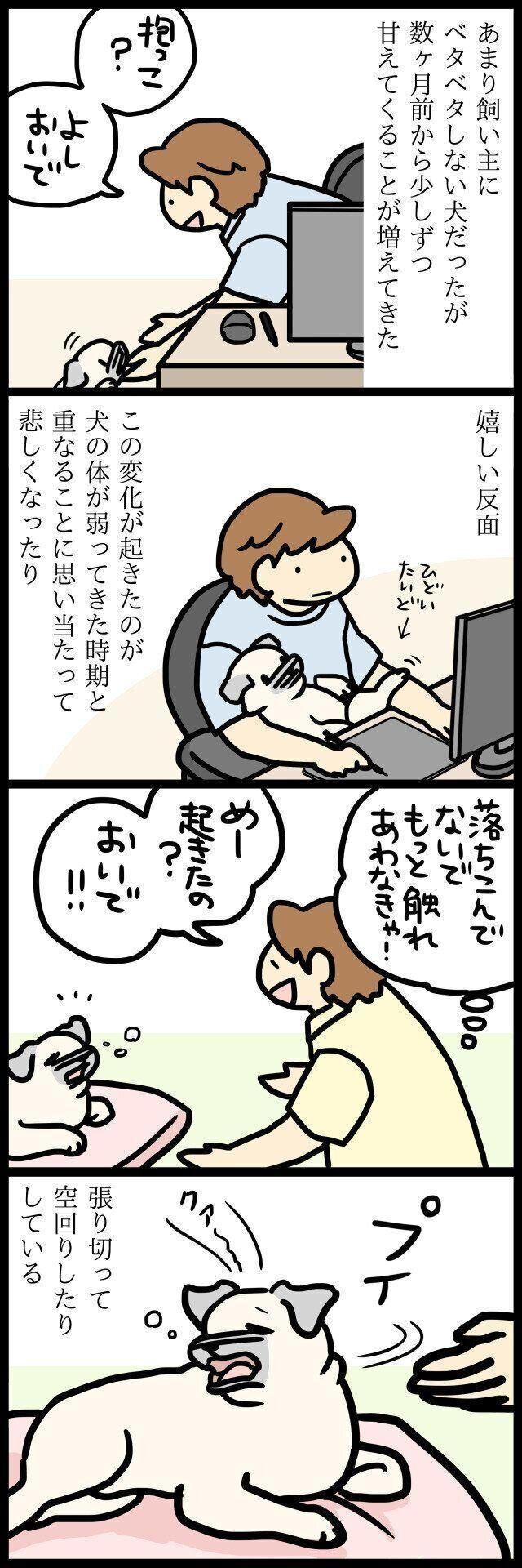 【連載】パグ犬・めー