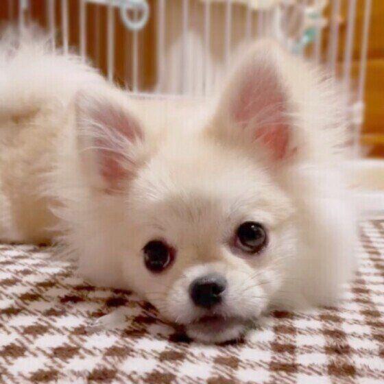 小型犬の虹郎ちゃん