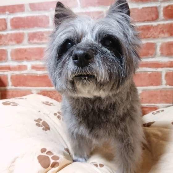 獣医師監修:シニア犬に多い病気「クッシング症候群」なるとどうなる?