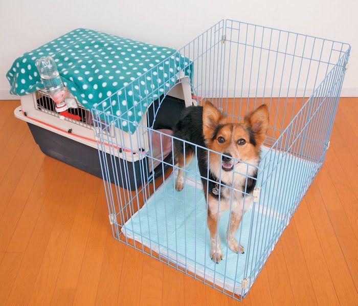 庭付き一戸建てスタイルの犬の生活スペース