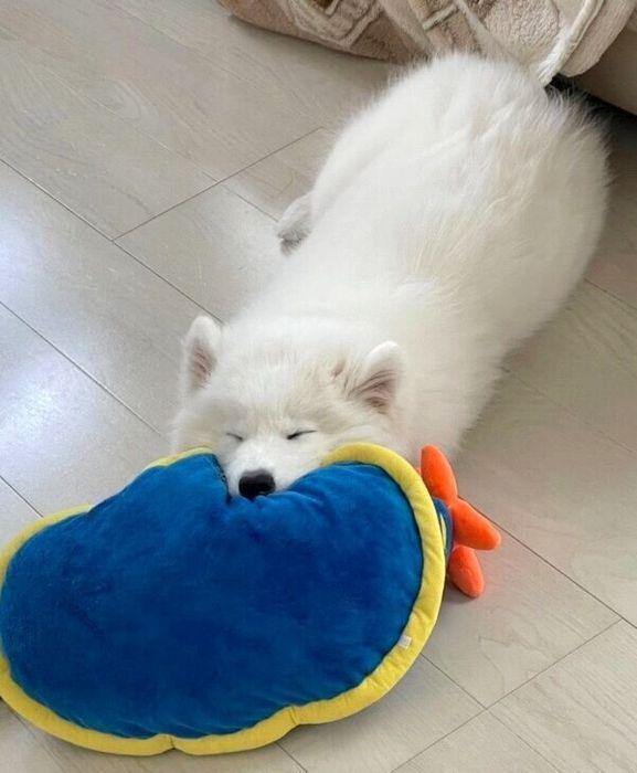 眠るゆきまるくん