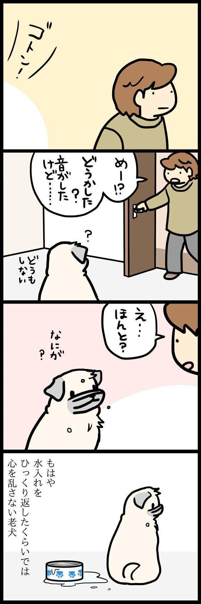 【連載】パグ犬めー