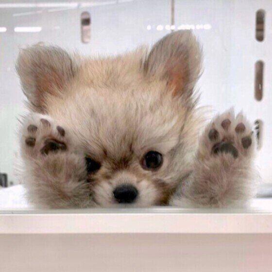 バンザイする子犬(MIX、オス)