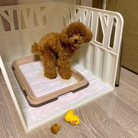 獣医師監修:犬の便秘に注意!ウンチのトラブルは下痢だけじゃない