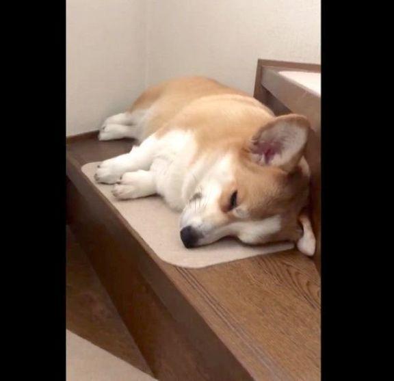 階段で寝ているムギちゃん