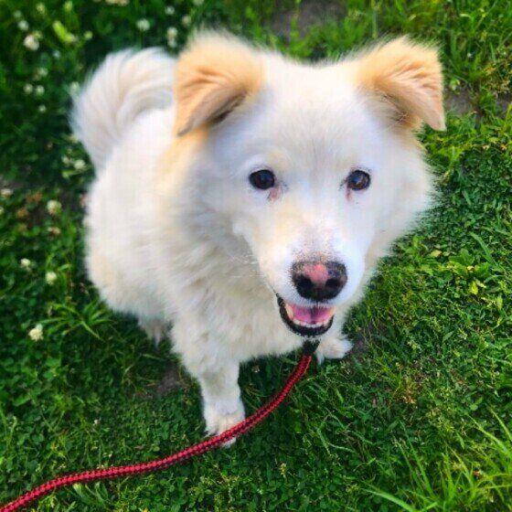 草むらを散歩中の犬