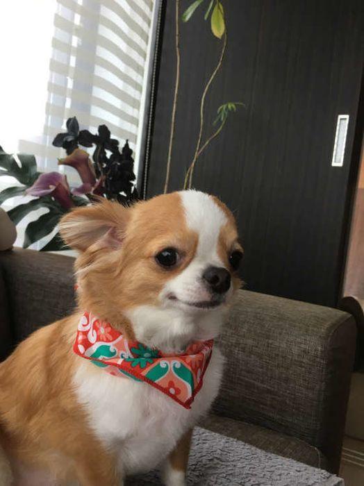 獣医師監修:歩けなくなった犬との暮らし方