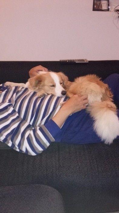 一緒に寝る犬