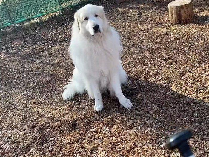怒られる犬