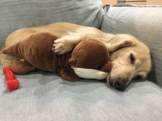愛犬が飼い主の足元で寝ている これは 信頼の証 って本当 いぬの