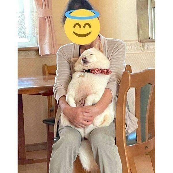 おばあちゃんが抱っこすると、すぐに寝てしまうだいふくさん