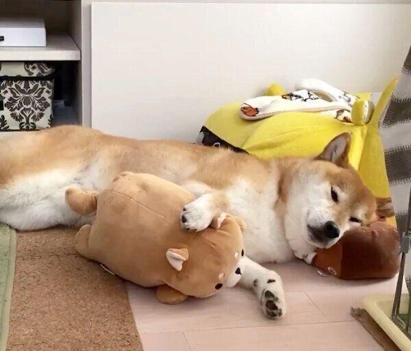 枕の使い方が上手すぎるぽてとくん