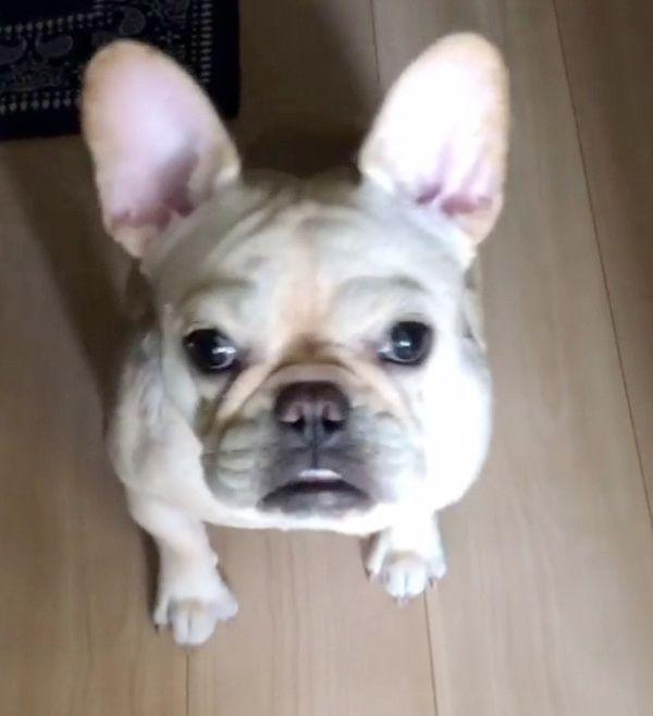 眉毛がすごい犬