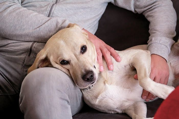 【更新】新型コロナウイルスは犬に感染するの?犬と暮らす人が気を付けたいことは