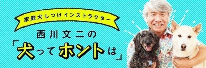 犬のしつけに本当に詳しい人は「〇〇」を知っている|連載・西川文二の「犬ってホントは」vol.34