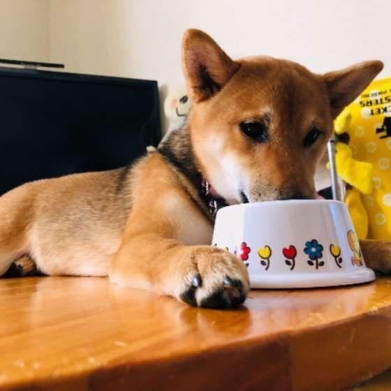 人間と犬の食器やスポンジを共用しない!食器の正しい管理方法