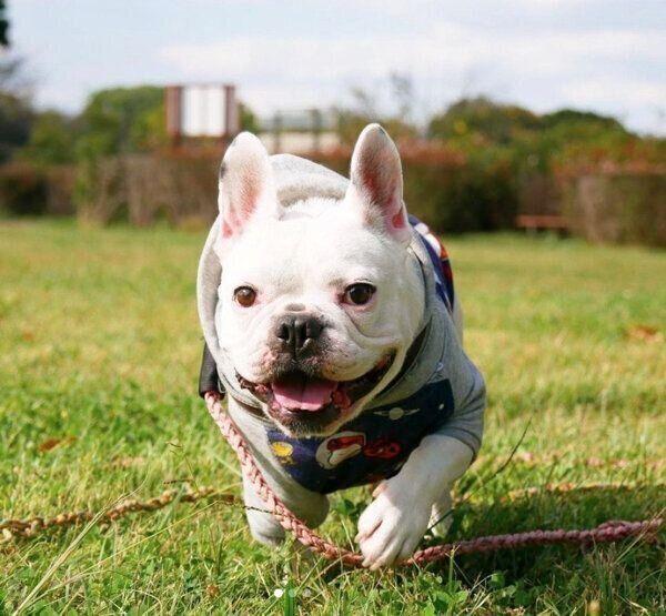 元飼い主の犬アレルギー発覚で飼育放棄寸前になった犬→新しい家族と出会い、幸せな日々を過ごしていた