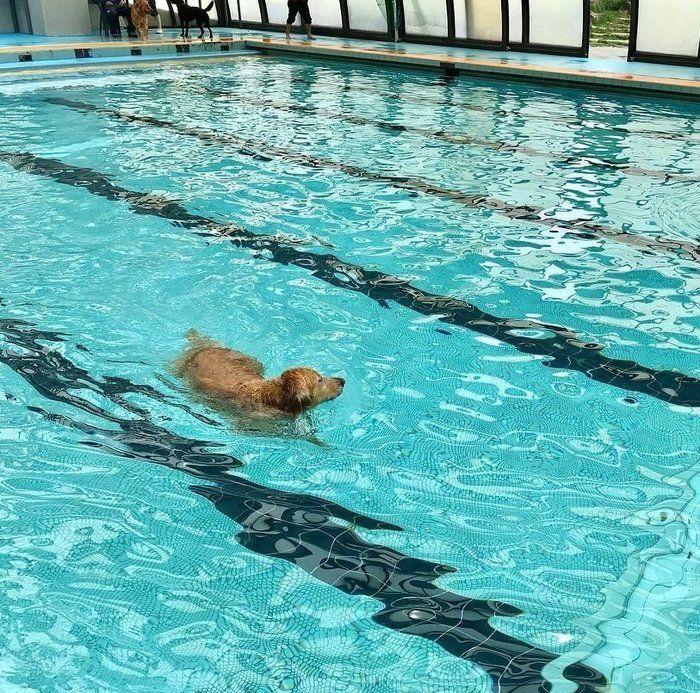 プールで泳ぐこむぎちゃん
