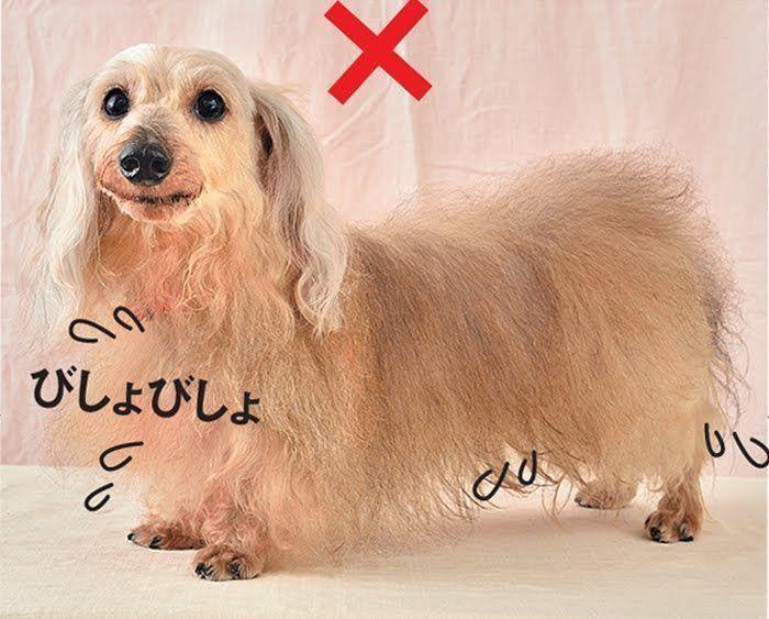 濡れたままの犬