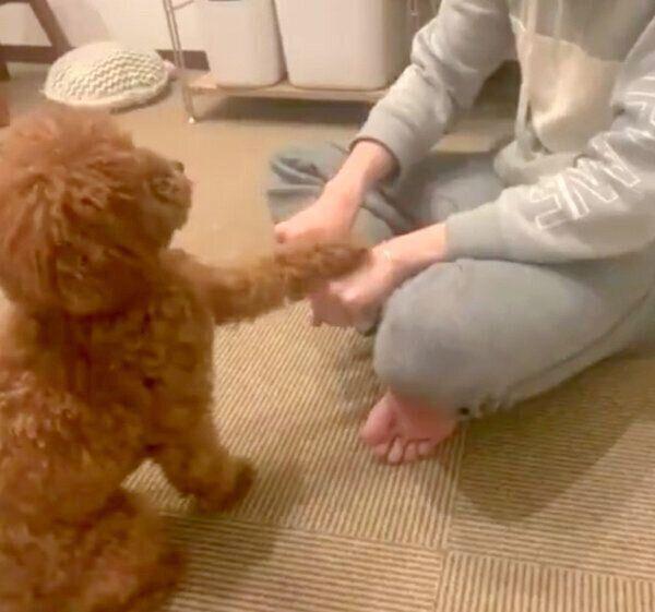 「どっちの手におやつを持っているか当てる」ゲームするからあげくん