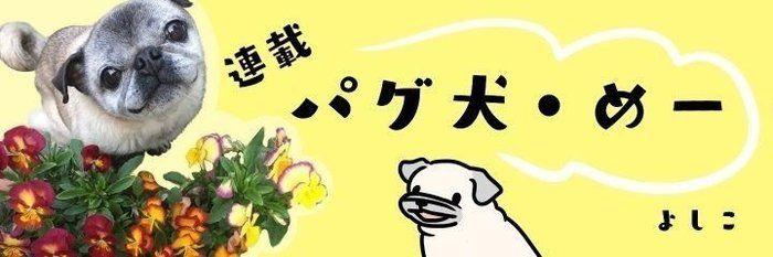 寒い日の散歩、パグ犬で暖を取る?|連載「パグ犬・めー」vol.81