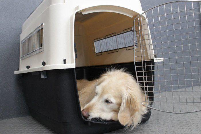 ↑元来犬は、狭くて薄暗いところを、寝場所として好む