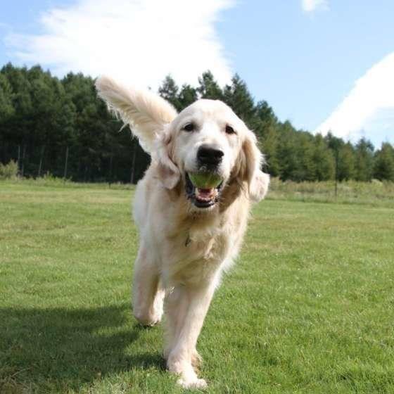 ボール遊びが楽しいな♪笑顔のわんこ
