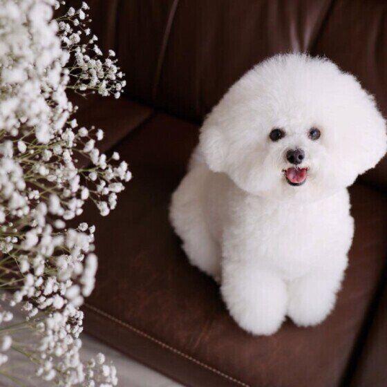 愛犬の不調は「ストレス」が原因のことも? ストレスが引き起こす犬の病気とは
