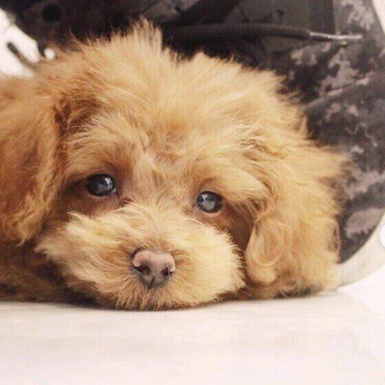 獣医師の往診をどんな時に検討すべき?犬の往診メリットデメリットも いぬのきもち