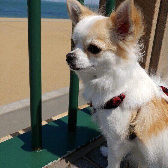 コロナ 散歩 犬 の