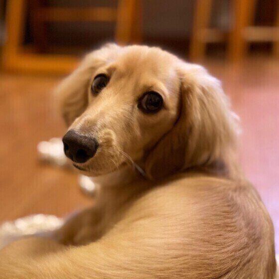 なぜ背を向けるの? 飼い主に「お尻をつけて座る」犬と仲良くなる方法