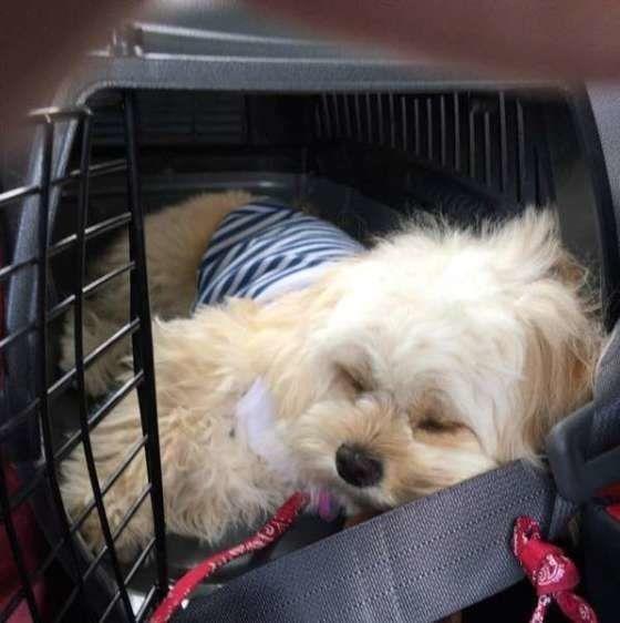 ドライブ中に眠ってしまったMIXのモコちゃん